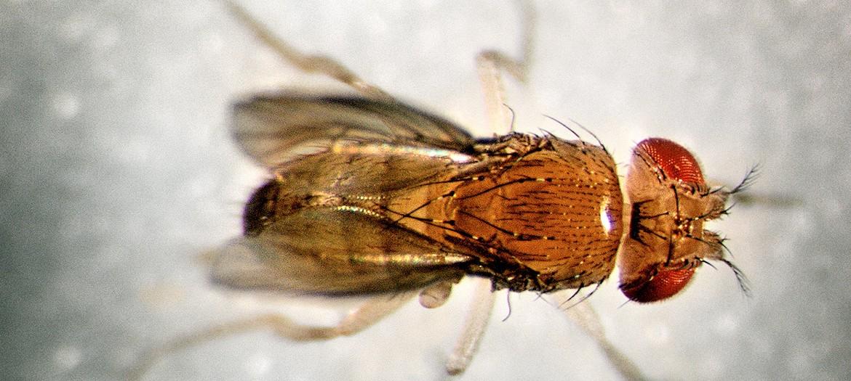 La mosca de Millás